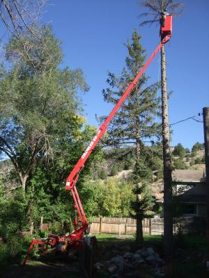 Aspen Snowmass Tree Trimming Removal Services